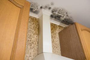 30A Mold Remediation